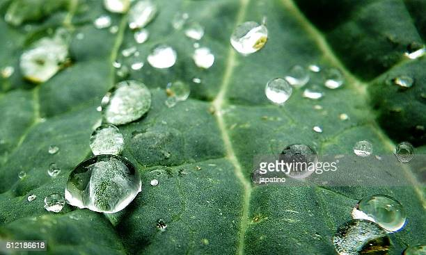 drops in a plant