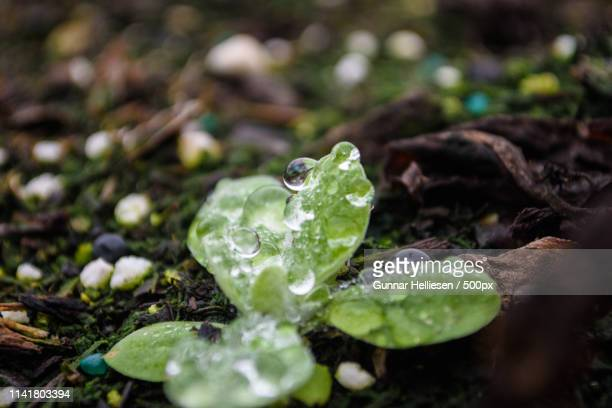 drops - gunnar helliesen stock pictures, royalty-free photos & images