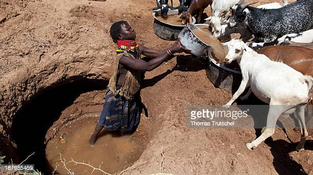 Drought and water shortage in North Kenya a Nomadic woman is scooping water out of a a digged hole to provide it for goats the water hole lies in a...