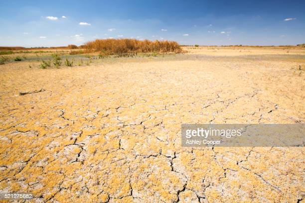 Drought at the Kern Valley Wildlife Refuge in California's Central Valley