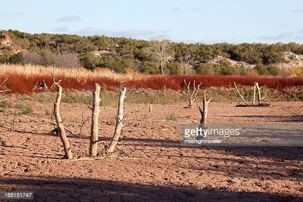 Drought conditions tree stumps reservoir Copper Breaks State Park Texas