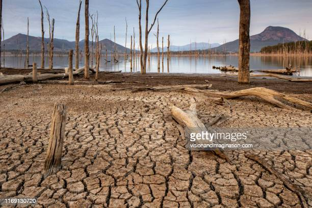 drought, cracked soil - drought stock pictures, royalty-free photos & images