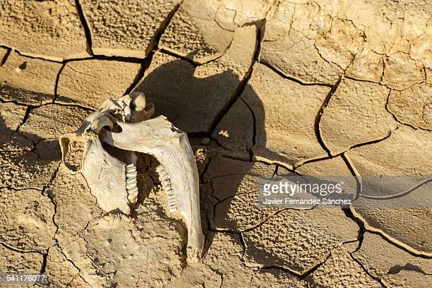 Drought, death drought, desertification