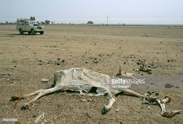 Drought in Burkina Faso A white Land Rover 4wheel drive vehicle drives past a dried out carcass