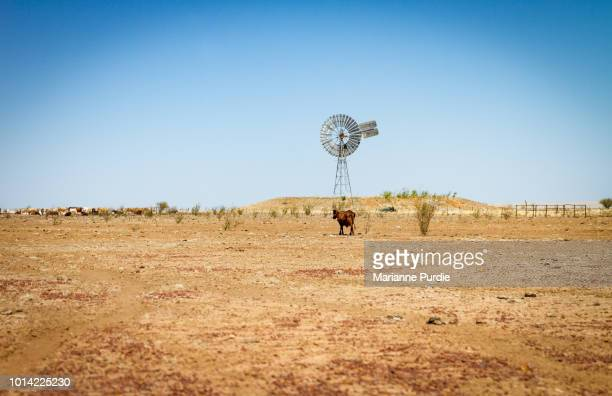 drought in rural australia - dry stock pictures, royalty-free photos & images