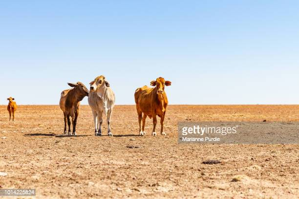 drought in rural australia - drought stock pictures, royalty-free photos & images