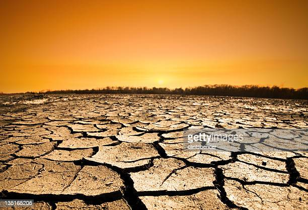 drought - global warming stock pictures, royalty-free photos & images