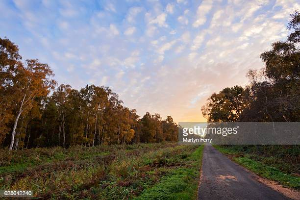 Drove road through Holme Fen at sunset, Holme, Cambridgeshire, East Anglia, UK