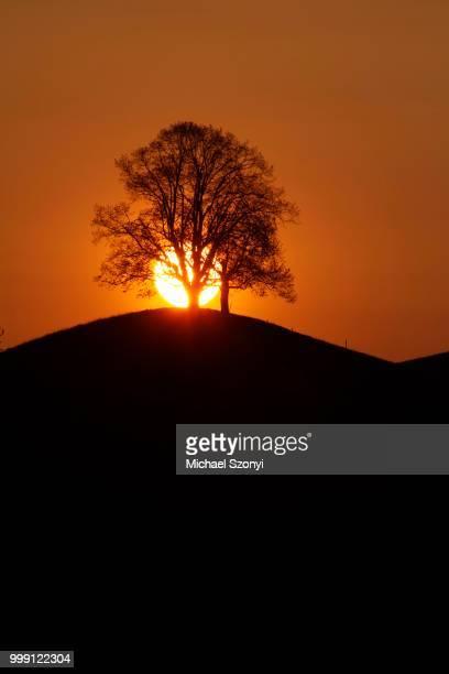 Drumlin with tree at sunset, Oelegg, Canton of Zug, Switzerland