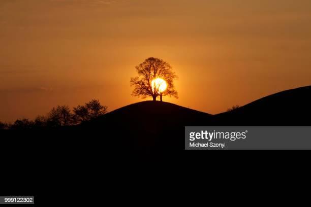 Drumlins with tree at sunset, Oelegg, Canton of Zug, Switzerland
