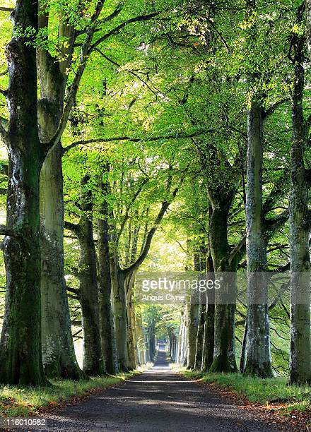 drummond castle drive perthshire scotland - crieff stock pictures, royalty-free photos & images