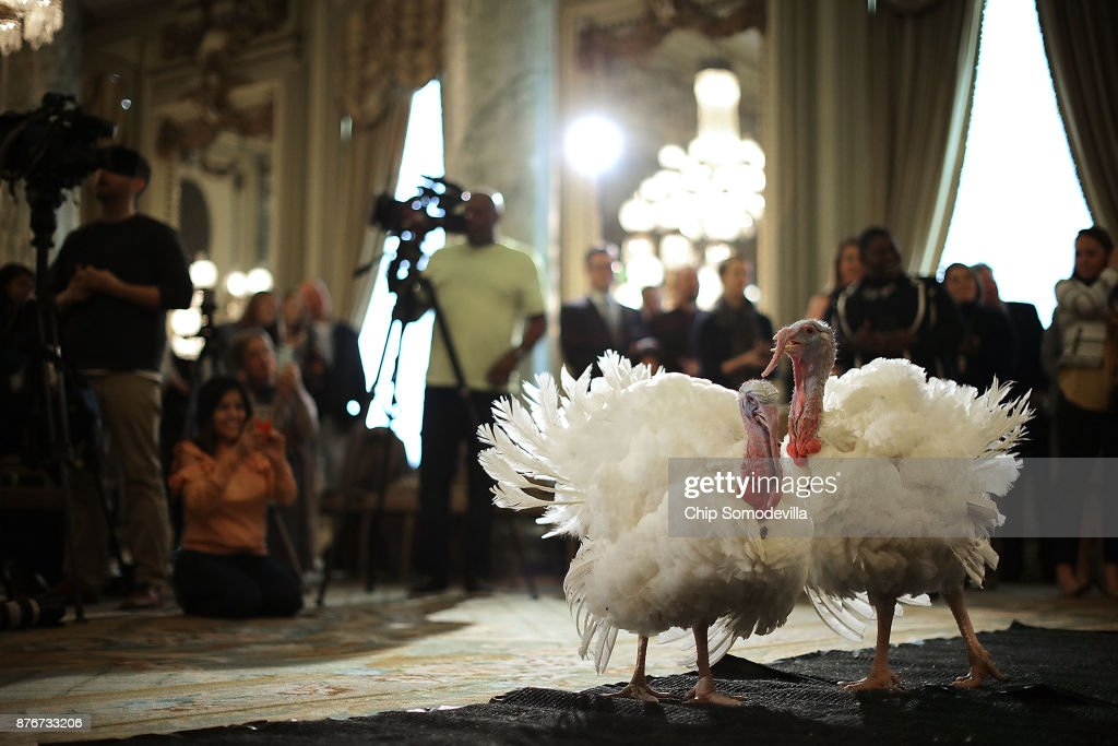 Drumstick and Wishbone, the National Thanksgiving Turkey and its alternate 'wingman,' are introduced during an event hosted by The National Turkey Federation at the Williard InterContinental November 20, 2017 in Washington, DC. One of the 40-pound fowl will be presented to U.S. President Donald Trump at the White House Tuesday, when he will ceremoniously 'pardon' the turkey. Both of the 20-week-old birds will then reside at their new home, 'Gobbler's Rest,' at Virginia Tech.