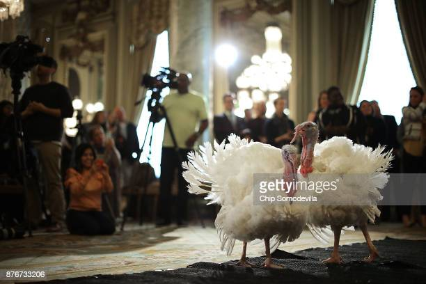 Drumstick and Wishbone the National Thanksgiving Turkey and its alternate 'wingman' are introduced during an event hosted by The National Turkey...