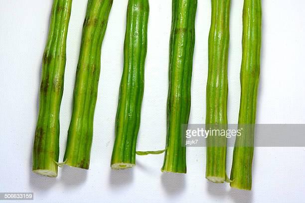 drumstick or moringa - moringa tree stock photos and pictures