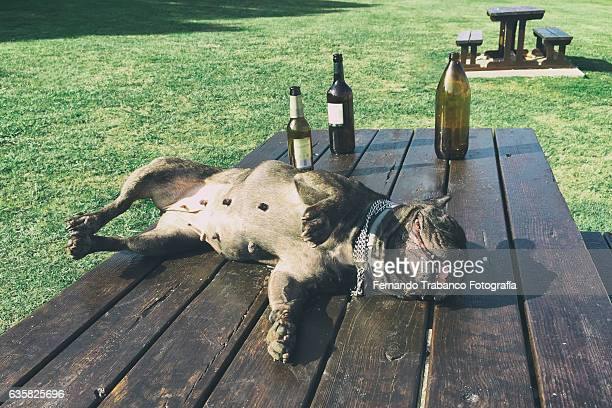 drunk dog - dead dog stock pictures, royalty-free photos & images