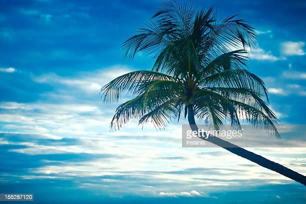 Drunken palm tree