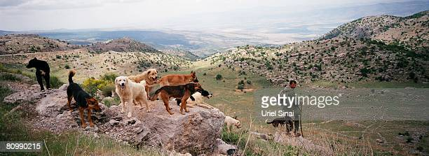 A Druze shepherd looks for his flock on the slopes of Mount Hermon April 29 2008 above Majdal Shams in the Golan Heights