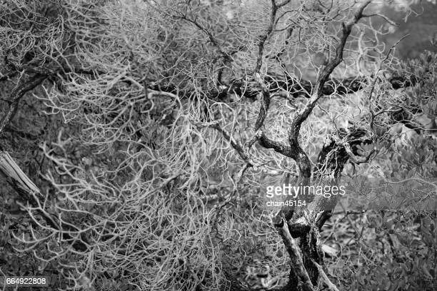 Dry Branch in the forrest in Black and white.