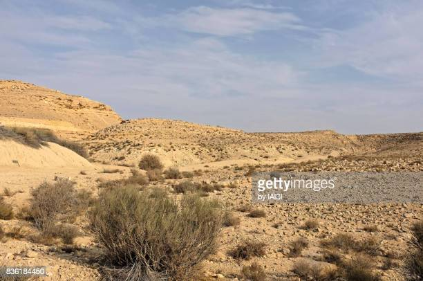 dry bushes in a wadi (riverbed) at the bottom of ramon crater - israel imagens e fotografias de stock