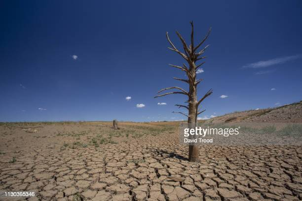 dry cracked earth - global warming stock pictures, royalty-free photos & images