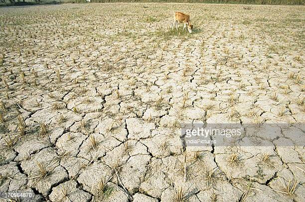 Dry cracked field during drought in rural West Bengal India