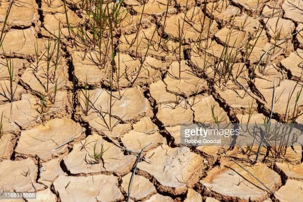 dry cracked land - western australia - erosionado fotografías e imágenes de stock