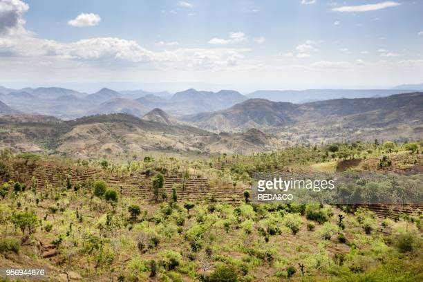 Dry farming on terraces in the steep and mountainous territory of the Konso Rift valley The Konso a tribe of the Ethiopian southern nations have...