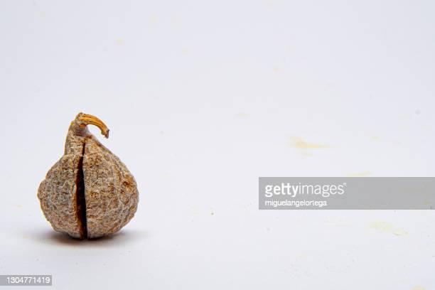 dry fig - miguelangelortega fotografías e imágenes de stock