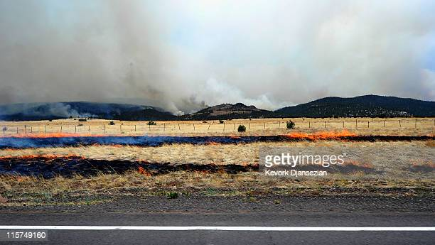 Dry gras burns after firefighters started a backburn operations to contain the out of control Wallow Fire along Highway 260 near Eagar, Ariz., on...