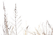 Dry grass field on white background.