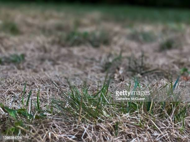 dry grass in the summer season - brown stock pictures, royalty-free photos & images