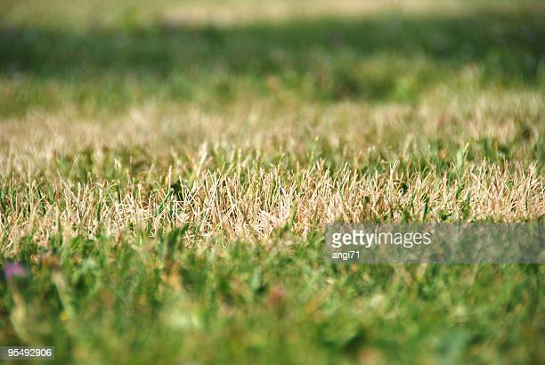 dry grass - dry stock pictures, royalty-free photos & images