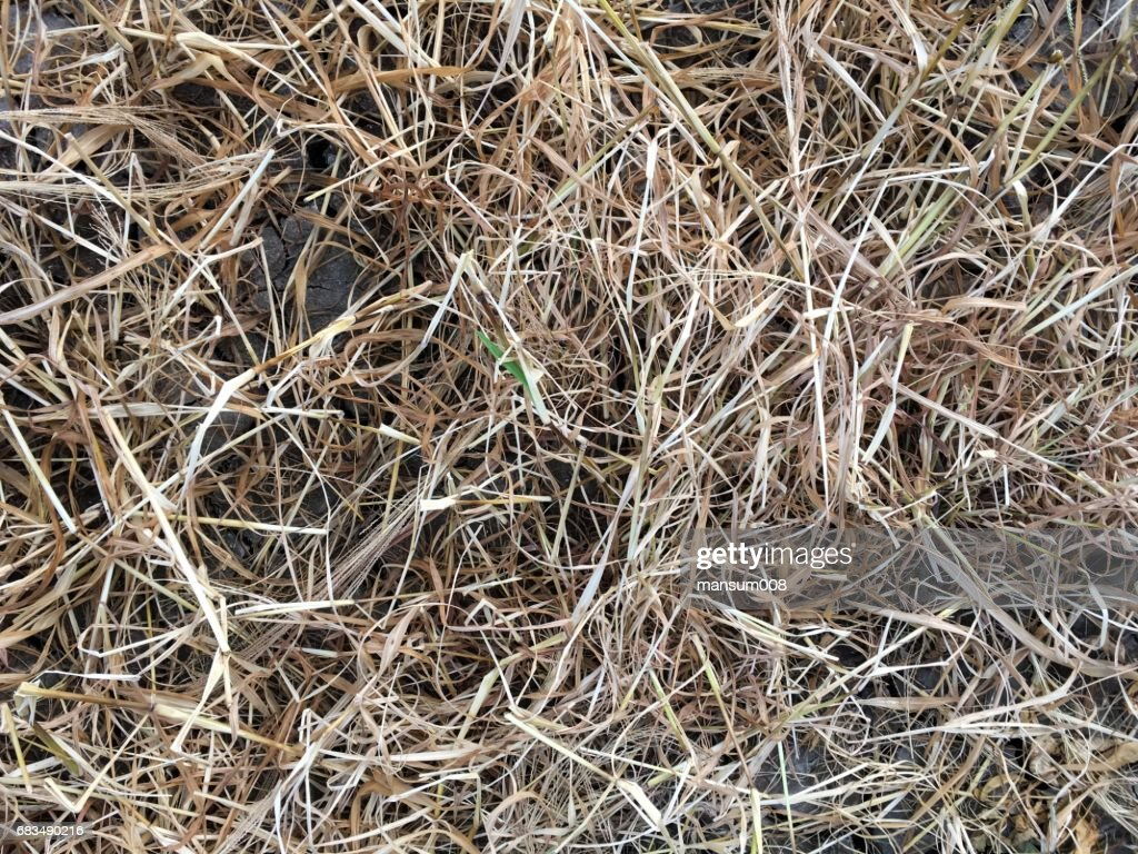 Dry Grass Texture On The Ground Stock Photo - Getty Images