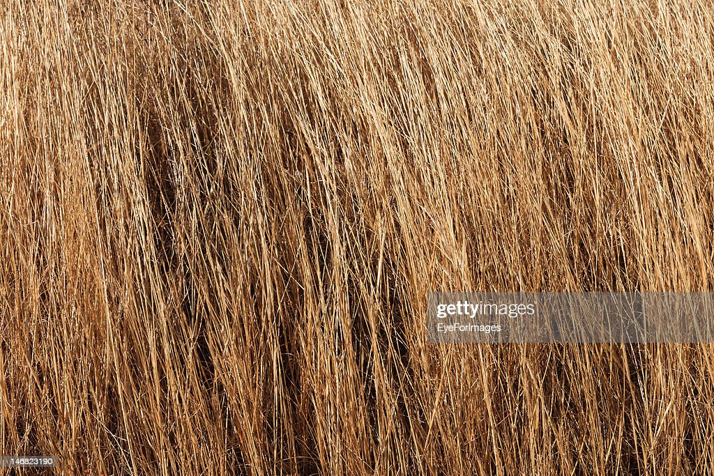 Dry Grass Texture Stock Photo - Getty Images