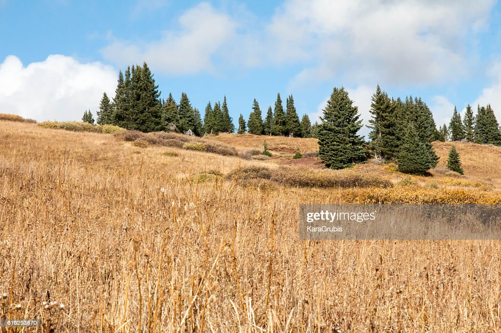 Dry grassland and sparse pine trees in high elevation Colorado : Foto de stock