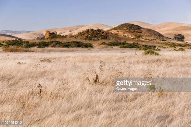 dry grasslands on the california coast - cayucos stock pictures, royalty-free photos & images
