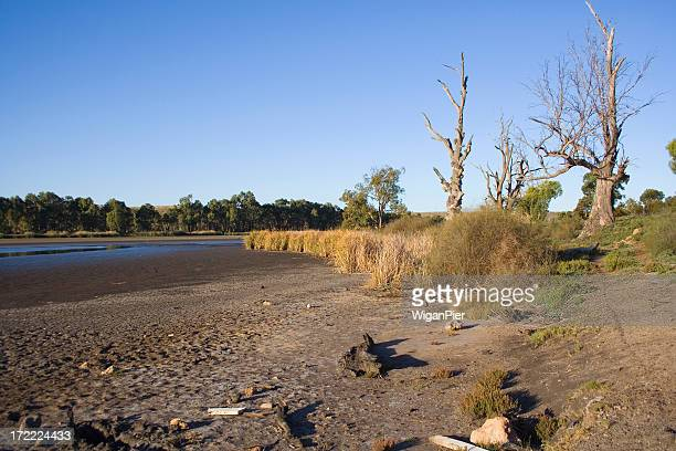 Dry ground and barren trees from a river drought