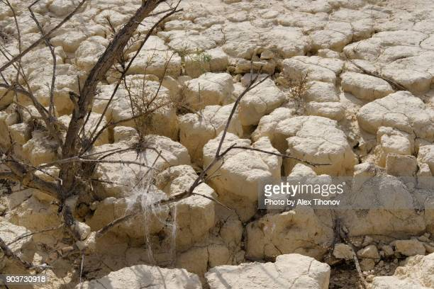 dry land - soil erosion stock photos and pictures