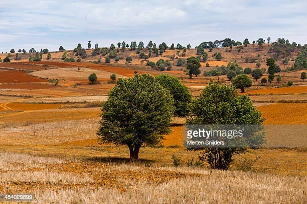 dry landscape at kalaw hiking trail - merten snijders stockfoto's en -beelden
