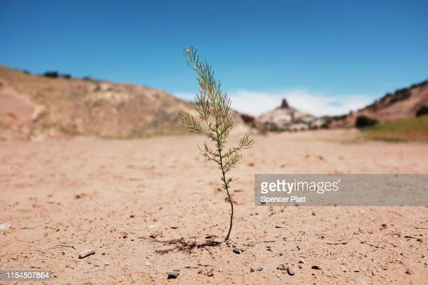 Dry landscape stands on Navajo Nation lands on June 07, 2019 in the town of Gallup, New Mexico. Due to a legacy of poverty, marginalization, and...