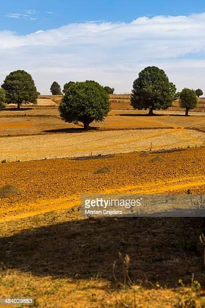 dry landscape with trees - merten snijders stockfoto's en -beelden