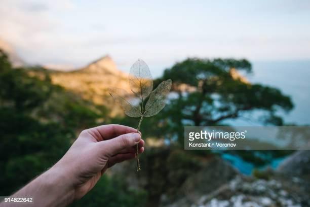 Dry leaf in hand. Scenic landscape on the background. The sea, pines, rocks. 'Noviy Svet' wildlife preserve, Crimea