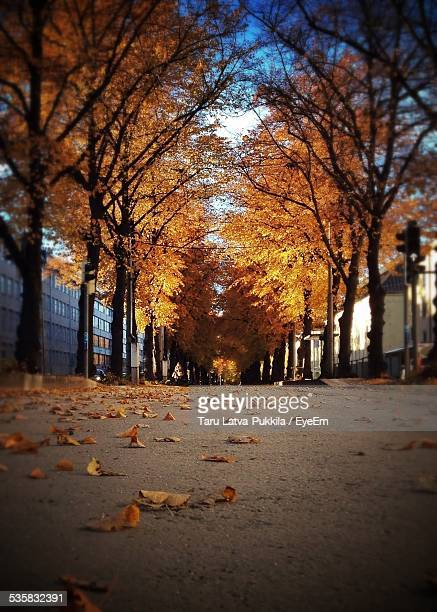Dry Leaves On Street Trees During Autumn