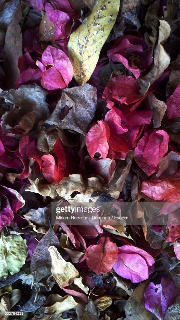 Dry Leaves : Foto stock