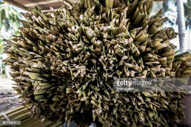 dry nipa (or nypa) palm leaves for making traditional rolling cigarette in kelantan. smoker will add tobacco later for rolling cigarette. - shaifulzamri stock pictures, royalty-free photos & images