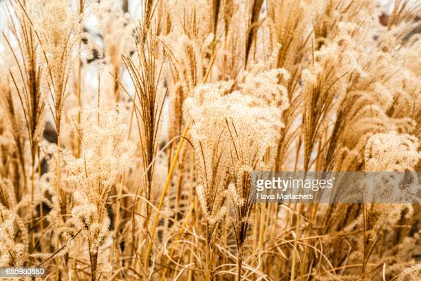 Dry pastures