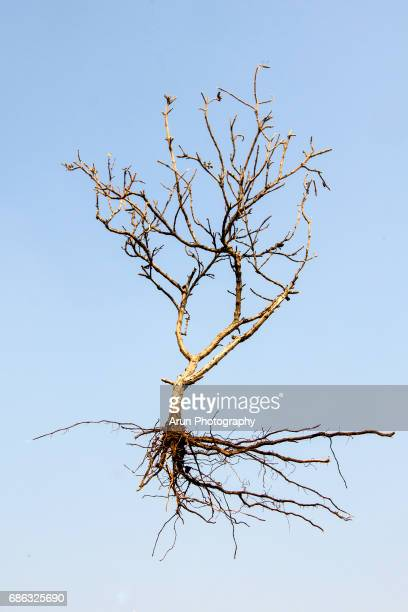 dry plant - tree roots stock pictures, royalty-free photos & images