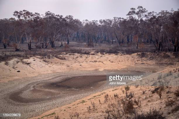 A dry pond lies in a bushfirescorched koala reserve on February 4 2020 in Peak View Australia Several weeks earlier fires swept through the reserve...