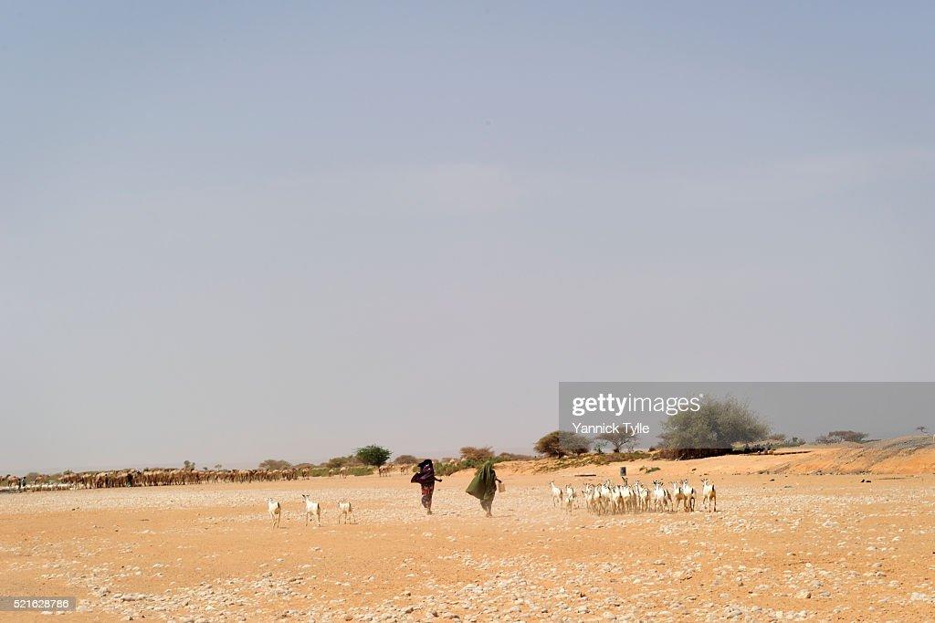 Dry riverbed in Puntland, Somalia : Stockfoto