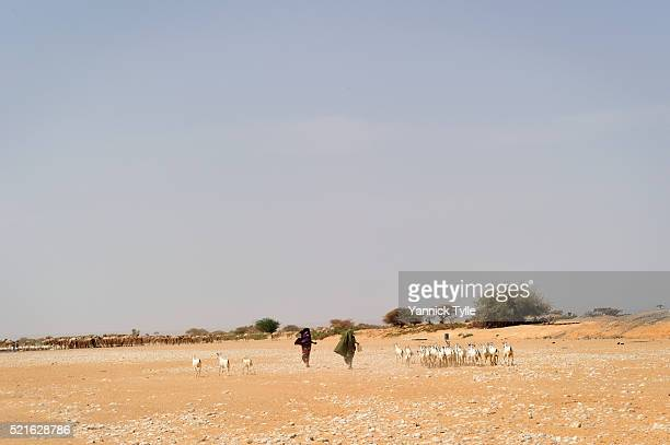 Dry riverbed in Puntland, Somalia